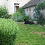 Jardin de Calipso Evolution été 2012 015