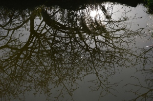 Reflets dans le bassin...