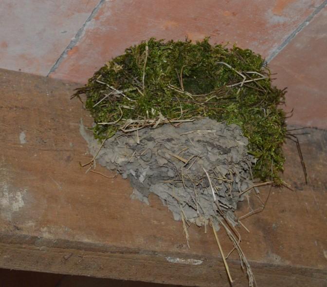 Un nid d'Hirondelle de fenêtre dans l'Atelier