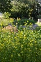 Un potager à la Mondrian... avec engrais verts