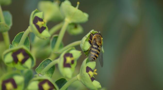 Les brèves – 02 mars  Ces insectes qui ont du pot : leur mission 'auxiliaires de vie' !