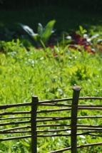 la jachère fleurie avec en fond la verbascum bombyciferum