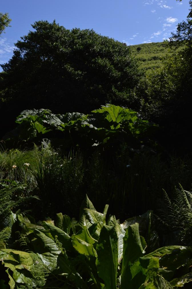 Port-Racine ou dans l'ombre d'un jardin de poète